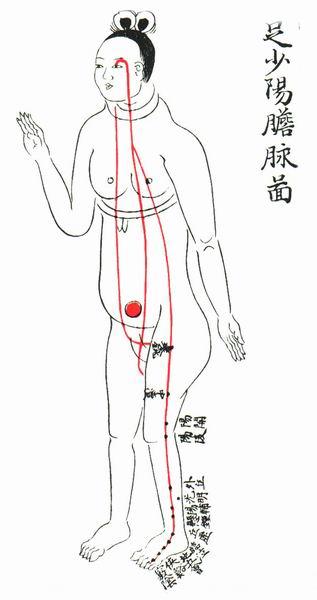 足少阳胆脉图