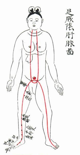 足厥阴肝脉图