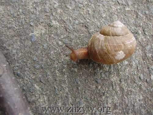 蜗牛卷使用步骤图片