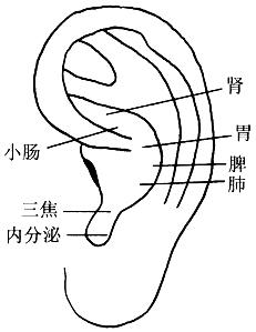 图7-1耳穴埋豆按压取穴图