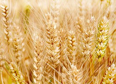 五谷杂粮的食疗养生与饮食禁忌