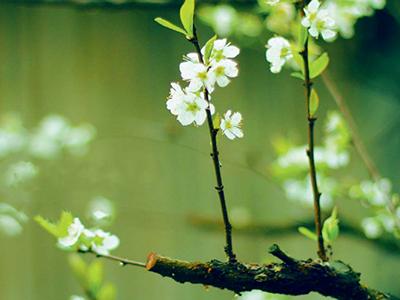 春天养肝好时机